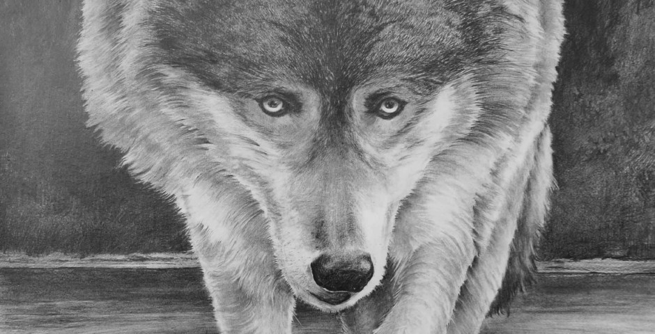 lupo nordico - disegno a matita 75x55 - 2015